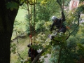 Pielęgnacja i wycinka drzew-Białystok
